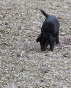 Not having pets didn't stop me from playing with my Nebraska neighbor's puppy!