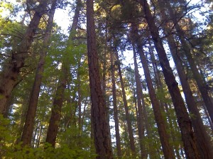 Collings Mountain Forest Near Bigfoot Trap