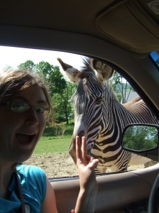 Zebras were one of the several animals I got to pet and feed at The Farm at Walnut Creek. Another highlight was when a giraffe tried to eat my hair!
