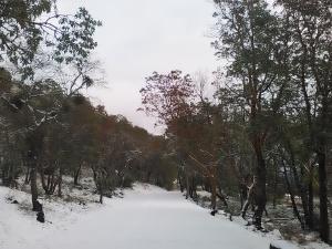 January 2017 snow
